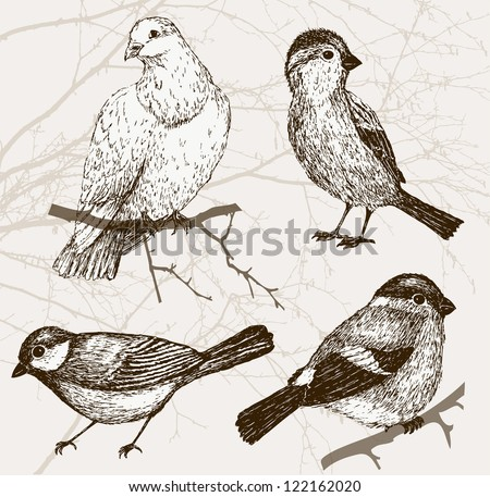 Bird collection - sparrow, pigeon, bullfinch, titmouse. Set of vintage bird on background with branch