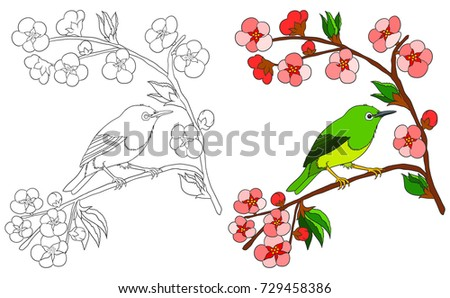 bird coloring book isolated on