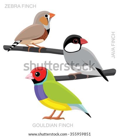 Bird Finch Set Cartoon Vector Illustration