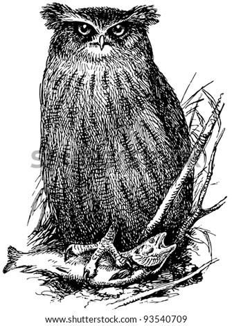 Bird Fishing owl