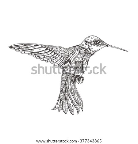bird hand drawn humming bird