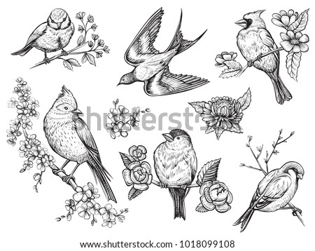 Bird hand drawn set in vintage style with flowers. Spring birds sitting on blossom branches. Linear engraved art.