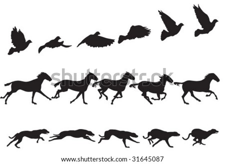 bird  horse and dog in motion