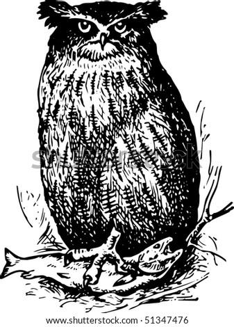 Bird ketupa blakistoni
