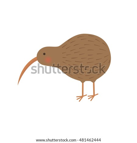bird kiwi illustration for the