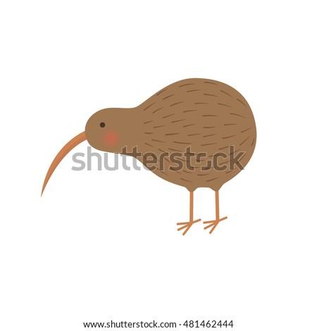 bird kiwi illustration for the