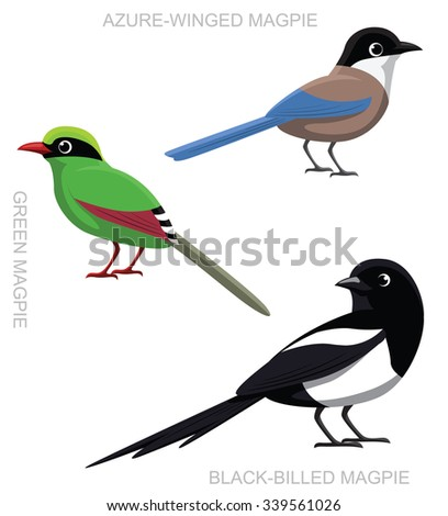 bird magpie set cartoon vector