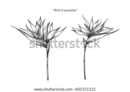 bird of paradise flower by hand