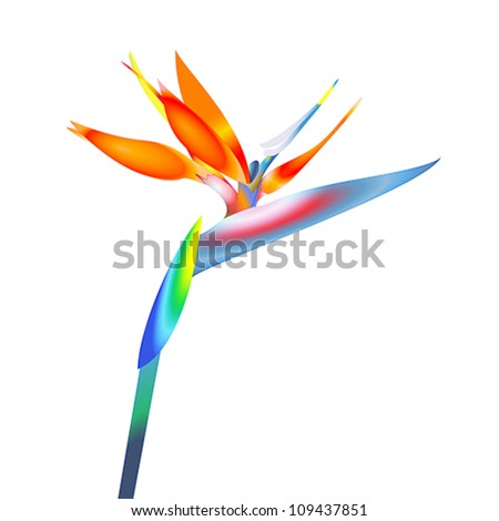 bird of paradise flower, vector