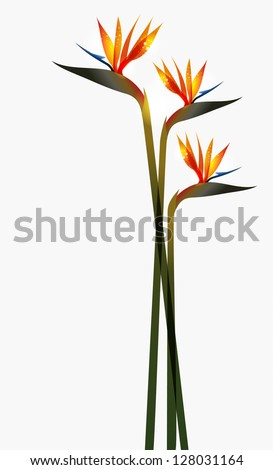 bird of paradise transparent