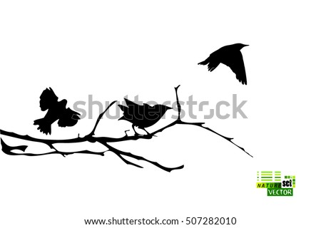 bird on a tree branch vector