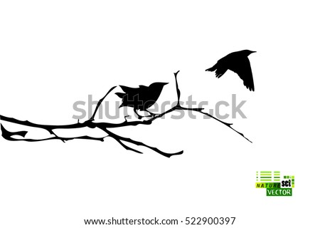 bird on a tree branch vector