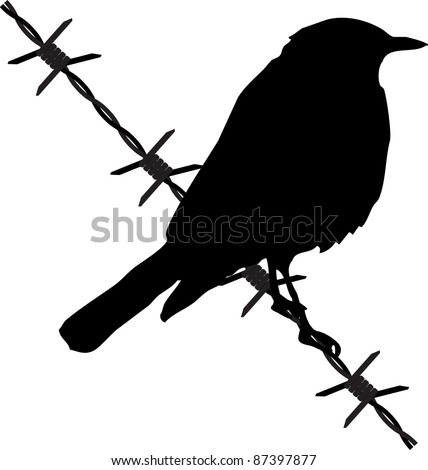 bird on the barbed wire