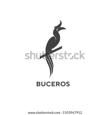 """Bird or hornbill head """"Buceros vigil Forster"""" from Indonesian Borneo"""