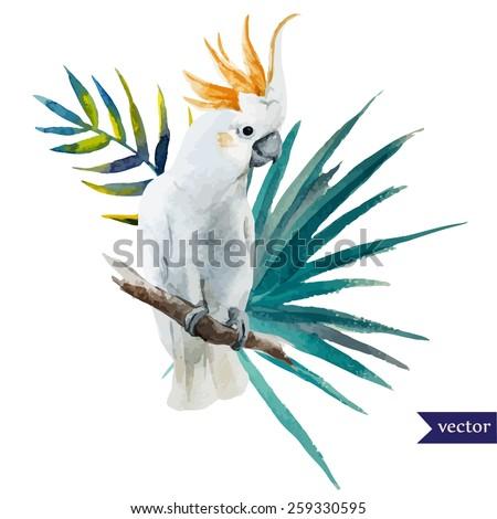 bird  parrot  hibiscus  jungle