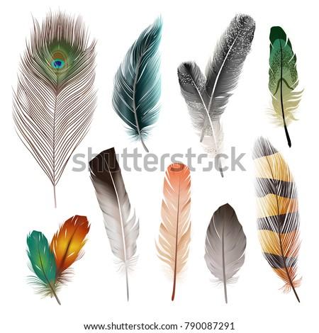 Bird realistic feathers set in different shape and color isolated vector illustration