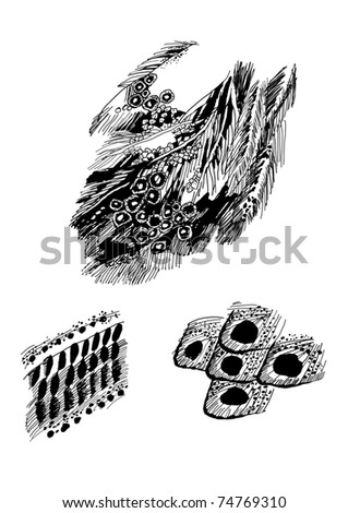 bird's feathers graphic vector sketch