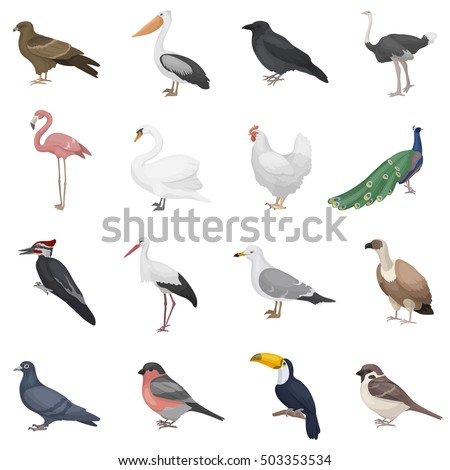 bird set icons in cartoon style