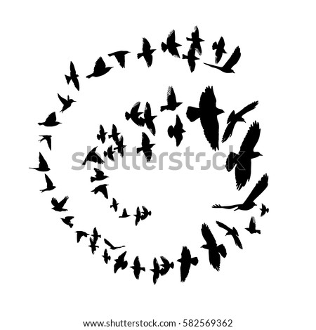 bird silhouette in a circle