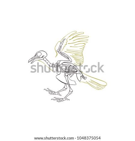 Bird skeleton. Isolated vector object on white background.