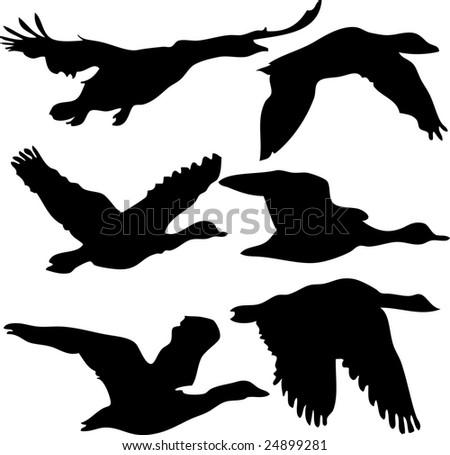 bird, vector, silhouette