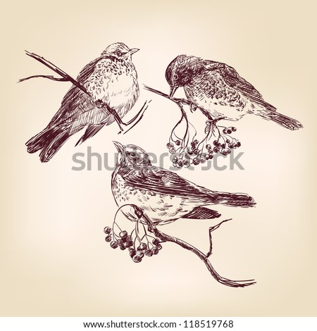 bird  - vintage hand drawn vector illustration
