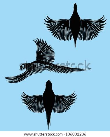 birds design