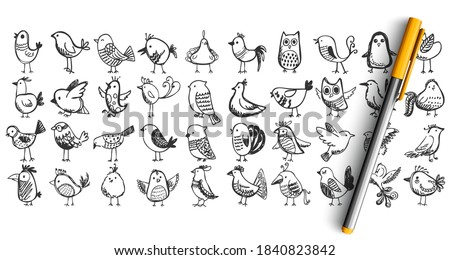 Birds doodle set. Collection pencil pen ink hand drawn sketches templates patterns of flying animals nightingale owl tree sparrow pigeon isolated in line. Zoology ornitology forest fauna illustration. Stockfoto ©