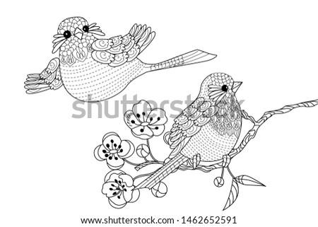Vector De Colección De Aves De Dibujos Animados Descargue Gráficos