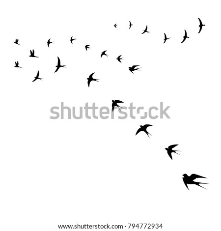 birds icons, a set of flying swallows,vector illustration