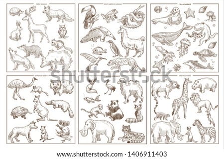 Birds mammals and amphibians wild animals species sketch icons vector forest and South American sea and Australian Asian and African creatures rabbit and deer sloth and leopard seal and whale kangaroo