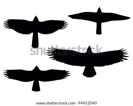 Birds of pray silhouettes. Vector eps8