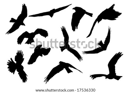 birds of prey aloft, vector collection - stock vector