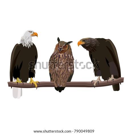 birds of prey set   bald eagle