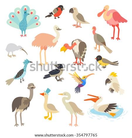 birds of the world  a big set