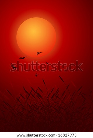 birds on red sunset. decorative background