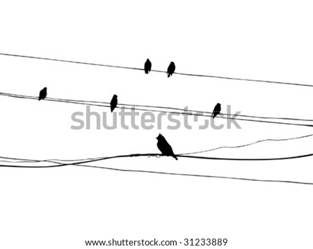 birds on wire, vector