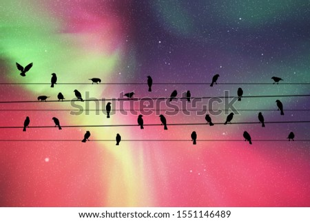 birds on wires at night vector
