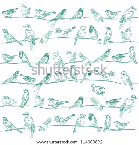 Birds Seamless Background for design and scrapbook in vector