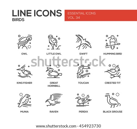 birds   set of modern vector...