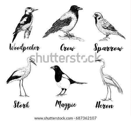 Birds Set Sketch Collection Of A Heron Sparrow Stork
