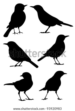 birds silhouette   6 different