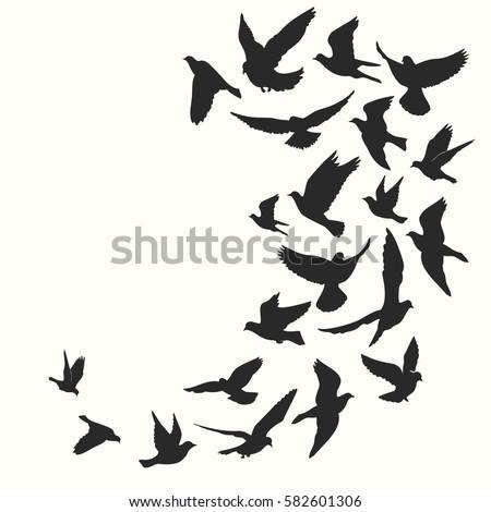 Birds silhouette vector background