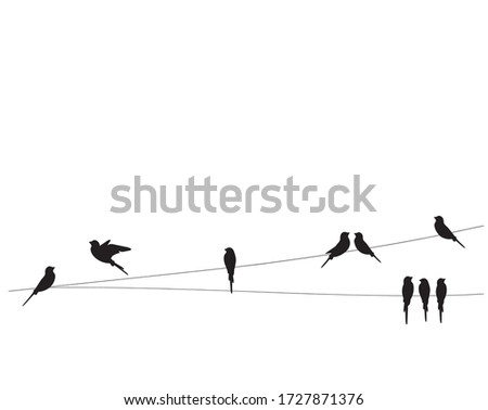 Birds silhouettes on wire, vector. Wall decals, wall art work. Scandinavian minimalist poster design isolated on white background. Flying bird silhouette, illustration.  stock photo