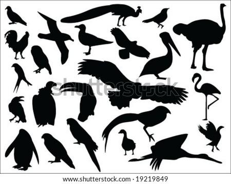 Birds silhouettes vector collection
