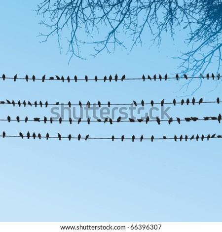 birds sitting on wires