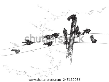 Birds. Vector  background of birds Silhouettes on electrical wires
