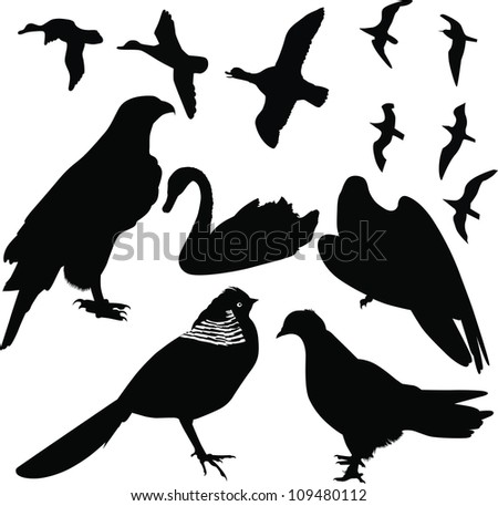 birds vector isolated on white background