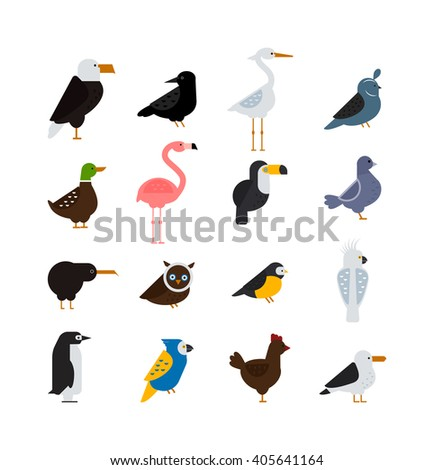 birds vector set birds