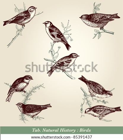 "Birds - vintage engraved illustration - ""Cent récits d'histoire naturelle"" by C.Delon published in 1889 France"